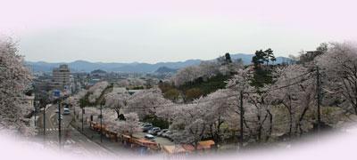 桜満開の西山公園