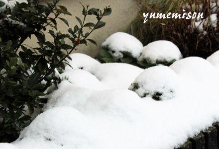 雪を冠ったハボタン