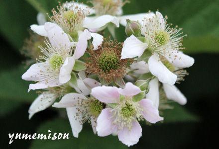 ブックべりーの花