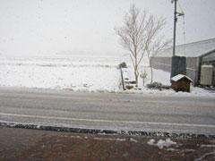 今日も、雪です。