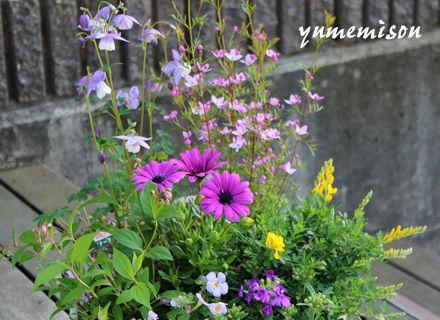 春の花の寄せ植え