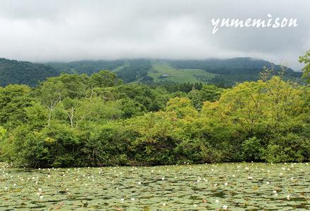 妙高高原のいもり池