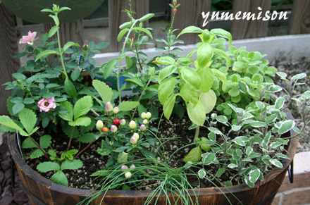 花とハーブの寄せ植え