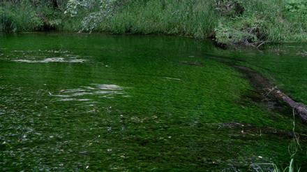 梓川の支流