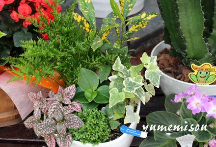 小さめの観葉植物の寄せ植え