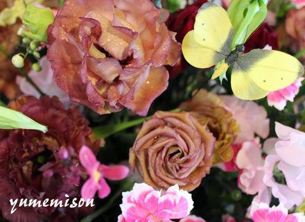 変わった色のバラ