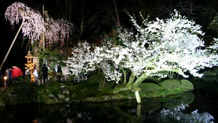 兼六園の夜桜ライトアップ