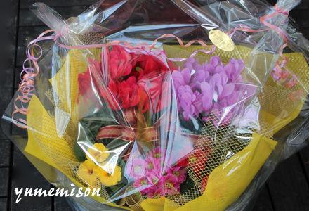 シクラメンの花かごセット