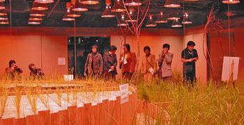 ビルの地下で、稲作!