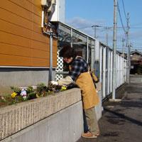 花香房夢見草の回りに、花を植えます。