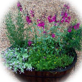 樽に植えた花とハーブの寄せ植え