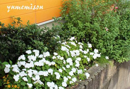 夢見草の花壇のインパチェンス