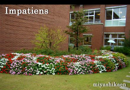 蕪城小学校の中庭にあるインパチェンスの花壇