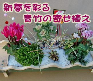 新春を彩る青竹の寄せ植え