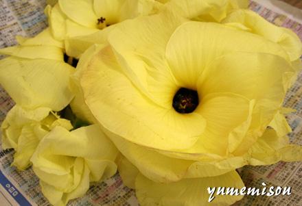 食用の花オクラ