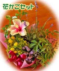 敬老会用の花かごセット