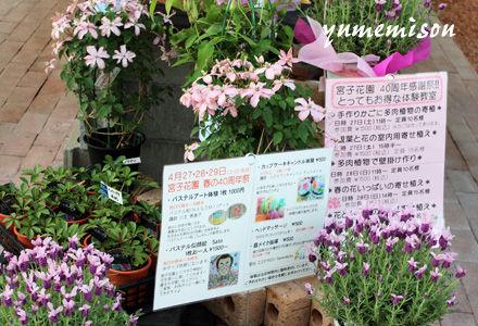 宮子花園の春の感謝祭