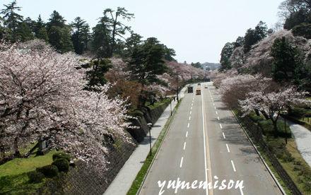桜並木が続きます。