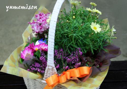 マーガレットとミニシクラメンの花かご