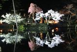 瓢池に映る夜桜