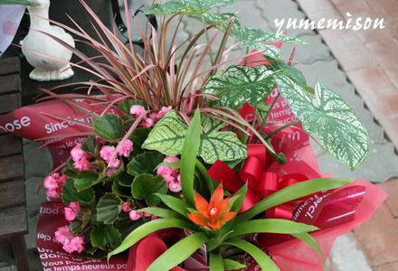 観葉植物の花かごセット