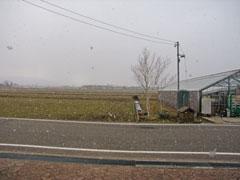 雪がチラチラ降りました。