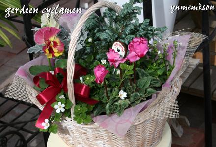 ガーデンシクラメンの花かごセット