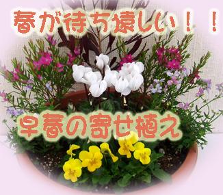 早春の寄せ植え