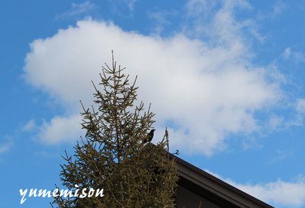 モミの木と青空