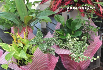 観葉植物の小さい寄せ植え