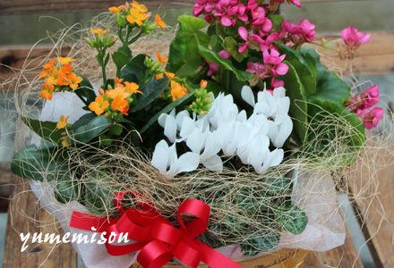 ガーデンシクラメンの花かご