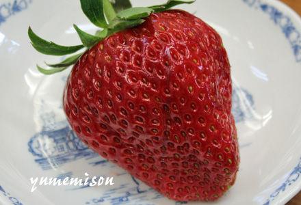 大粒イチゴ
