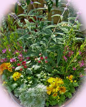 秋の花の寄せ植え