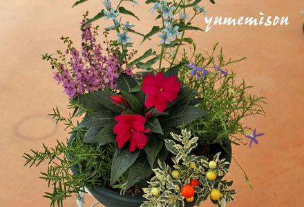 夏の花の寄せ植え