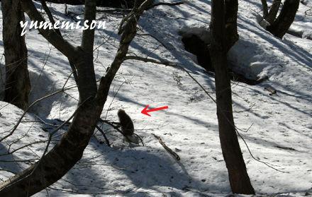 旧吉野谷村の山で猿を見かけました。