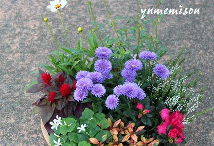 秋の花で寄せ植え