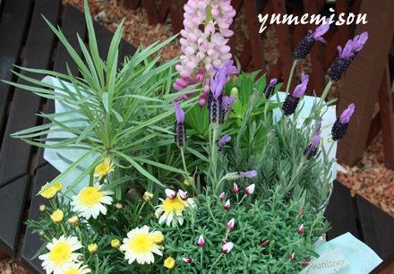 スモークツリーの花かごセット
