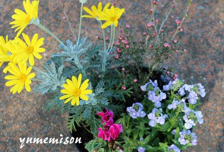 立春の寄せ植え