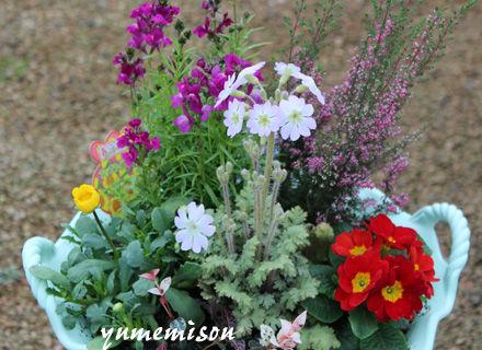 春色プランターの寄せ植え
