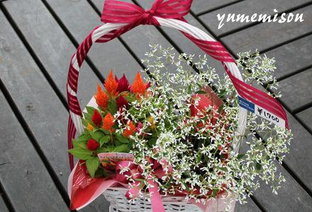 ユーフォルビアの花かご