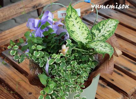 観葉植物のセット