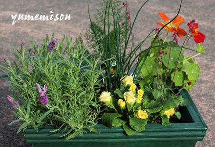 ハーブと花の寄せ植え