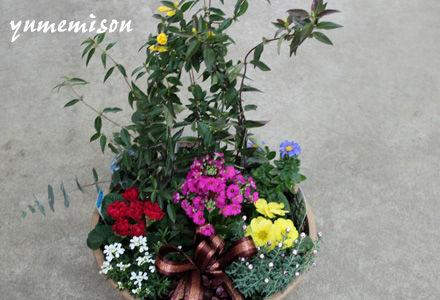 季節の花の寄せ植え