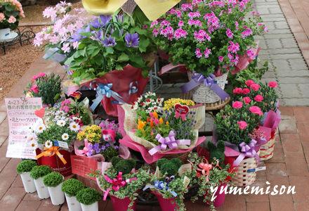 花いっぱいの宮子花園の春の感謝祭