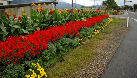 鶴来バイパス沿いの見事な花壇