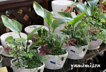 小さい観葉植物の寄せ植え
