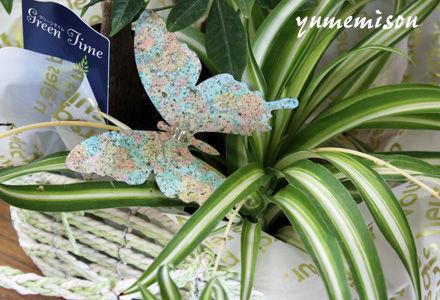 オリズルランに蝶の飾り