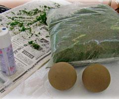 玉のオアシスと苔