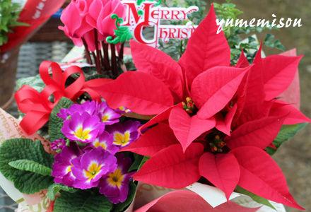 クリスマスの花カゴ