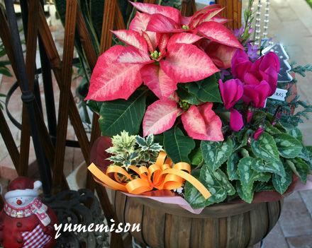 ポインセチアの花かごセット